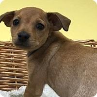 Adopt A Pet :: Taylor - Decatur, AL