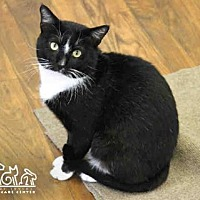 Adopt A Pet :: SANTANA - Irvine, CA