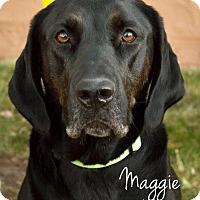 Adopt A Pet :: Maggie - Cheyenne, WY