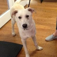 Adopt A Pet :: Logan - Garland, TX