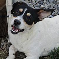 Adopt A Pet :: Felipe - Liberty Center, OH