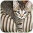 Photo 3 - Domestic Shorthair Kitten for adoption in Struthers, Ohio - Gail