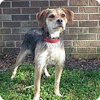Adopt A Pet :: Natty - Mocksville, NC