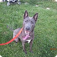 Adopt A Pet :: Jasmine - Elyria, OH