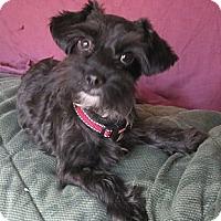 Adopt A Pet :: Mona - Warwick, NY