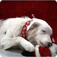 Adopt A Pet :: Akira - Mesa, AZ