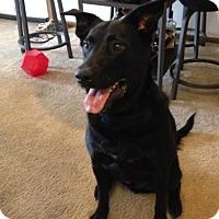 Adopt A Pet :: Leo - Courtesy Post - Tipp City, OH
