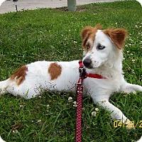 Adopt A Pet :: J Patch - Lafayette, LA