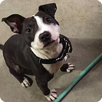 Adopt A Pet :: Arnold - Davison, MI