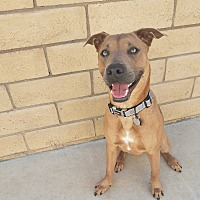 Adopt A Pet :: Tony Soprano - Saugus, CA