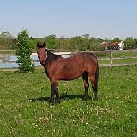 Adopt A Pet :: Talulah - Seville, OH