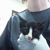Adopt A Pet :: BART - Conroe, TX