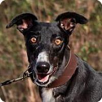 Adopt A Pet :: Ms. Firecracker - Douglasville, GA