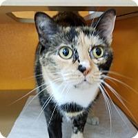 Adopt A Pet :: Pita - Elyria, OH