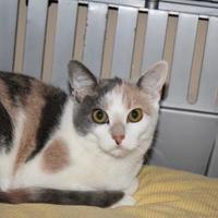 Adopt A Pet :: Topanga 620-17 - Cumming, GA