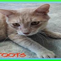 Adopt A Pet :: TOOTS - Fort Walton Beach, FL