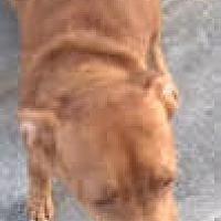 Adopt A Pet :: Abby - Thousand Oaks, CA