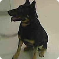 Adopt A Pet :: Keetah - Hamilton, MT