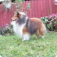 Adopt A Pet :: Logan - Alderson, WV