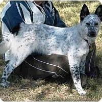 Adopt A Pet :: Kimba *Adoption Pending* - Phoenix, AZ