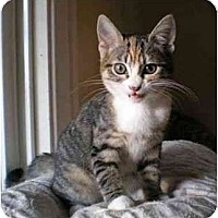 Adopt A Pet :: Piper - Portland, OR