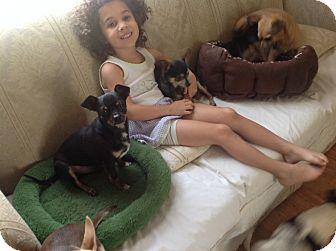 Chihuahua Dog for adoption in Milton, Florida - TJ