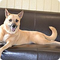 Adopt A Pet :: Audrey- I love KIDS! - Redondo Beach, CA