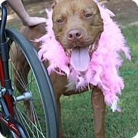 Adopt A Pet :: Ruby - Snellville, GA