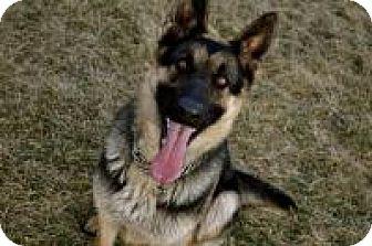 German Shepherd Dog Dog for adoption in Nampa, Idaho - LUNA