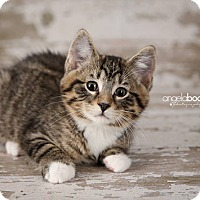 Adopt A Pet :: Martell - Plymouth, MN