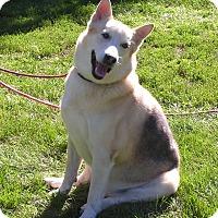 Adopt A Pet :: Butch - Rigaud, QC