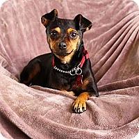 Adopt A Pet :: Ethel - Mission Viejo, CA