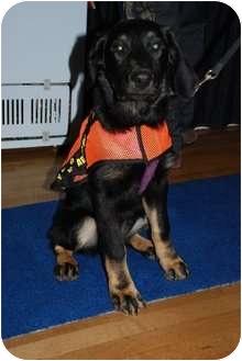 Rottweiler/Hound (Unknown Type) Mix Puppy for adoption in Surrey, British Columbia - Lucy