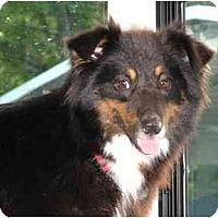 Adopt A Pet :: Gracie - Orlando, FL