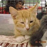 Adopt A Pet :: Malachai - Riverside, RI