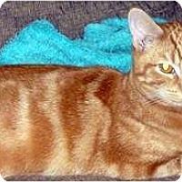 Adopt A Pet :: Samwise - Alexandria, VA