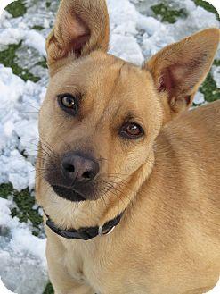 Shepherd (Unknown Type) Mix Dog for adoption in Meridian, Idaho - Fletch