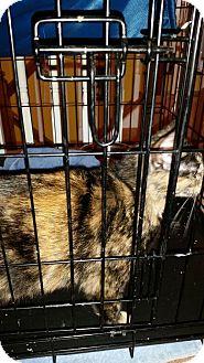 Domestic Shorthair Cat for adoption in Dahlgren, Virginia - Roxie