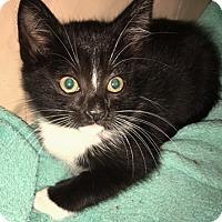 Adopt A Pet :: AnnMarieW - North Highlands, CA