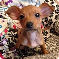 Adopt A Pet :: Bernadette - Garland, TX