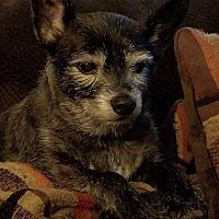 Adopt A Pet :: Miller - Bridgewater, NJ
