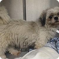 Adopt A Pet :: Mallory - Oak Ridge, NJ