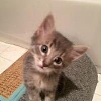 Adopt A Pet :: Patrick - San Jose, CA