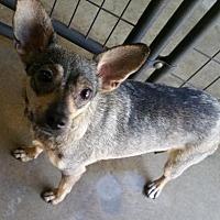 Adopt A Pet :: Nala - Stockton, CA