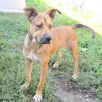 Adopt A Pet :: Ellie - Fayetteville, TN