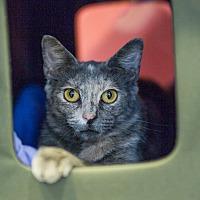Adopt A Pet :: Darla - Houston, TX