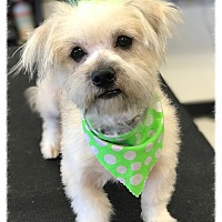 Adopt A Pet :: Thea - Los Alamitos, CA
