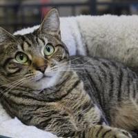 Adopt A Pet :: Melody - Brunswick, GA