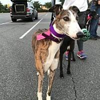 Adopt A Pet :: Longview - Spencerville, MD