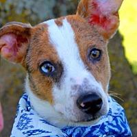 Adopt A Pet :: Tinsel - Batesville, AR